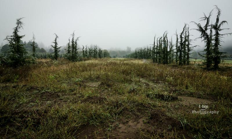 spooky trees 2-6931