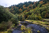 nehalem river autumn color-4282