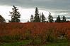 red plants_DSC0173