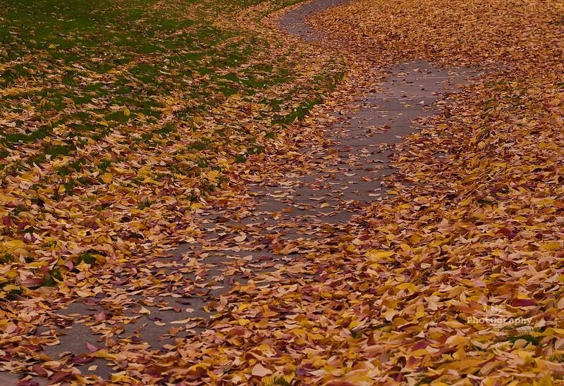 sherwood colors_DSC0018