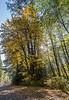 backlit autumn tree-2301