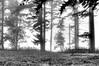 _DSC0036_7_8_tonemapped copy