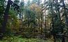 fall forest DSC_6952