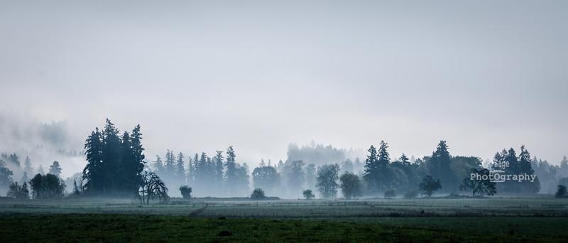fall fog-6904