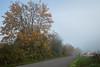 foggy morning-5343