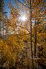 Beauty of Fall-5180