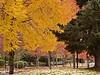 sherwood colors_DSC0028