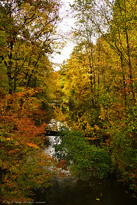 Autumn by the creek