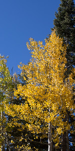 Autumn-9199
