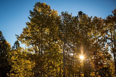 Autumn-9139
