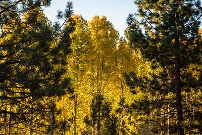 Autumn-9130