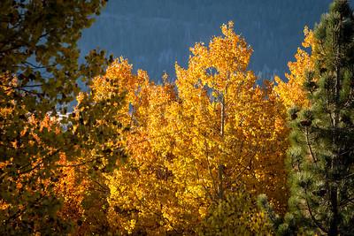 Autumn Yellow2