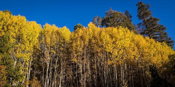 Autumn-9183
