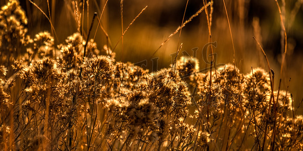 Autumn-9151_2_3_tonemapped