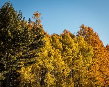 Autumn-9180
