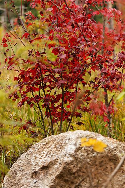 Autumn Color 2009