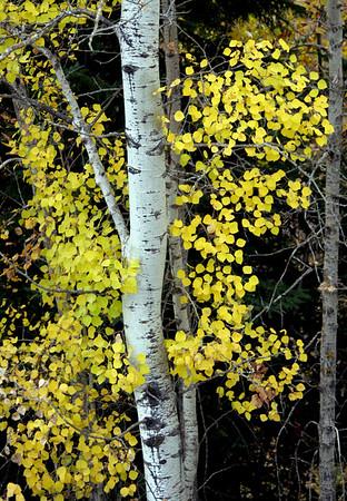 Autumn Colours Keephills
