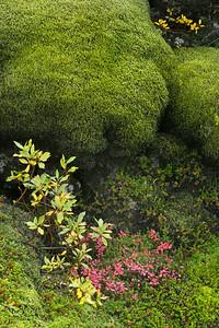 Laki Lava and moss