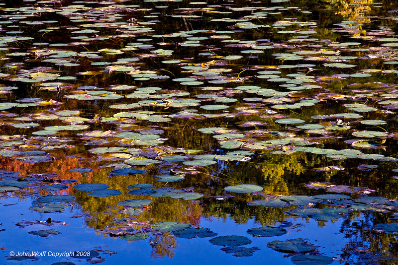 Autumn Lillypads at TeaTown Lake