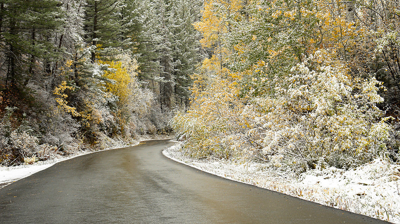 2007-LambsCanyonL02   Snow blankets the fall foliage in Lambs Canyon, Wasatch Mountains, Utah