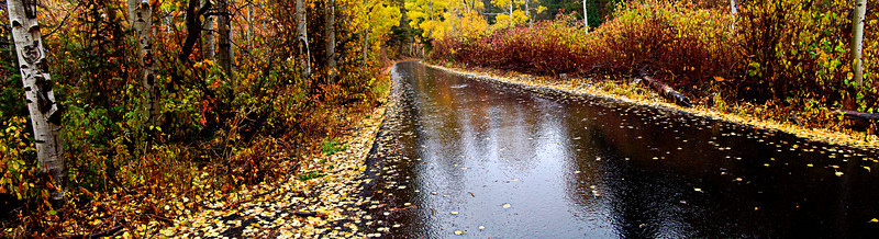 A Rainy Fall Day in Lambs Canyon, Wasatch Mountains, Utah