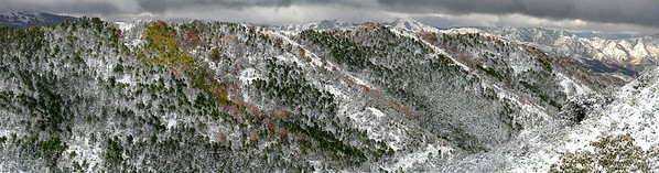 East Canyon, Wasatch Mountains, Utah.  A very early snowstorm blankets the autumn leaves before they fell.