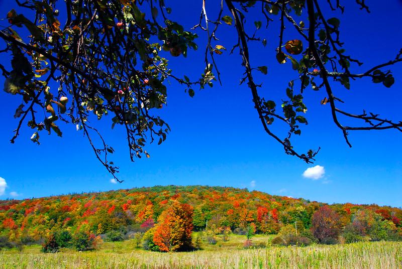 AutumnAppleTree-TuckerCo,WV-03