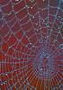 FallSpiderweb-01