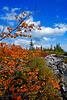 AutumnDollySods08-07
