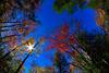LittleCanaanWMA-Oct2015-sjs-010