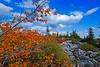 AutumnDollySods08-08