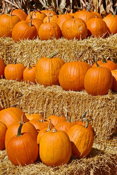 Outdoor Market with pumpkins along US Rt 50 in Romney, West Virginia.