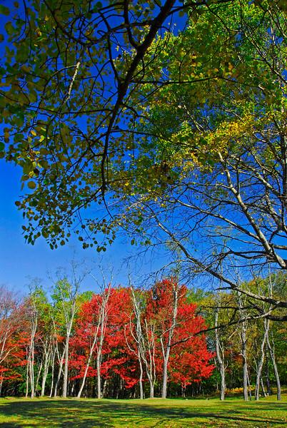 AutumnBlackwaterFallsSP-02