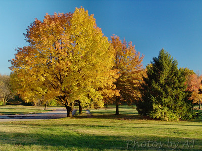 Autumn trees - airport buyout area of Carollton Subdivision