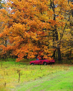 old truck under autmn leaves