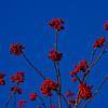 2008-11-23-13-03-02_7435_K10D