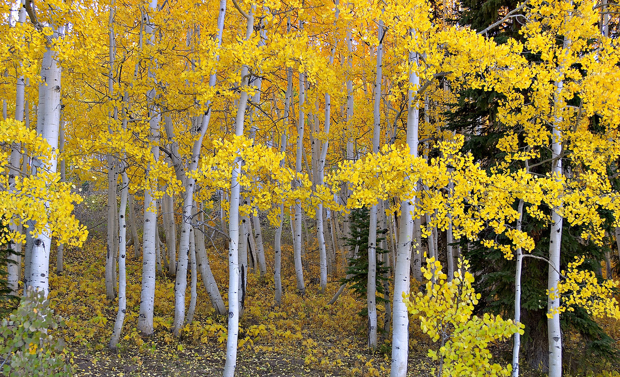 Capturefile: E:\My Pictures\Canon 10D\TRIPPER\Aspen Fall 2003\030928.002\DCIM\149CANON\CRW_4975.CRW<br /> CaptureSN: 220103652-1494975.740390<br /> Software: Capture One DSLR 1.2 Limited Edition for Windows