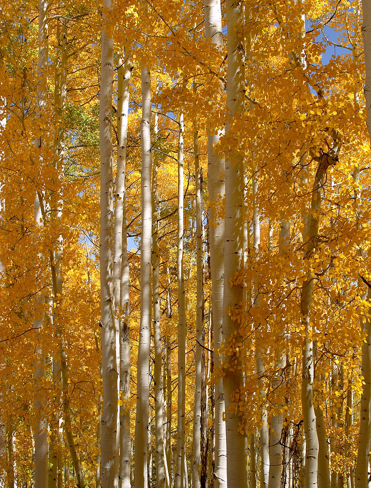 Capturefile: E:\My Pictures\Canon 10D\TRIPPER\Aspen Fall 2003\030927.004\DCIM\145CANON\CRW_4584.CRW<br /> CaptureSN: 220103652-1454584.670688<br /> Software: Capture One DSLR 1.2 Limited Edition for Windows