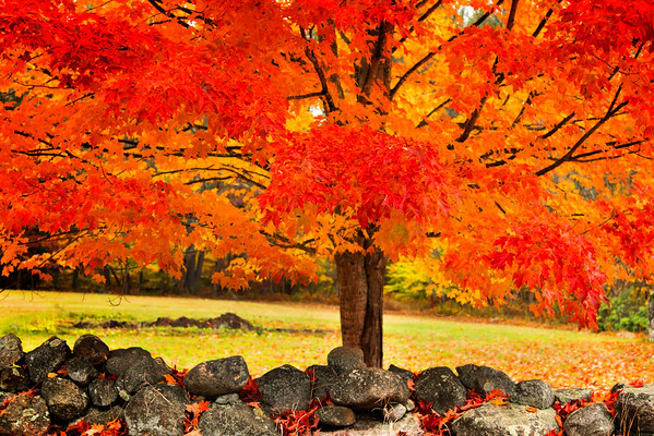 Autumn in New England 2016