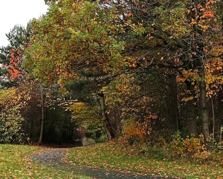 Autumn in Washington