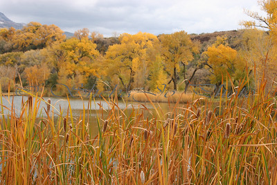 Fall Colors 2004. at Palisade Park, Colorado