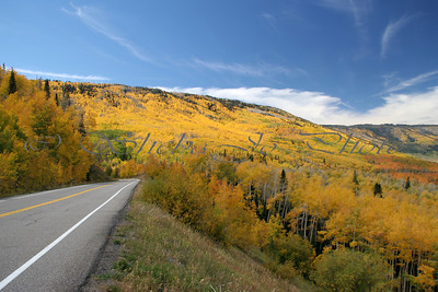 Fall colors on Grand Mesa...Colorado. The road is Grand Mesa Scenic Byway.