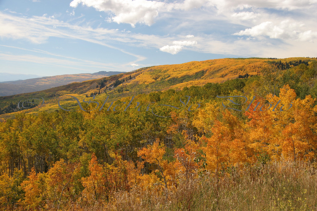 Fall colors on Grand Mesa...Colorado. This is almost the top of Grand Mesa Scenic Byway, dropping down to the Cedaredge side of Grand Mesa.