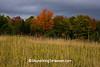 Fall Colors, Marathon County, Wisconsin