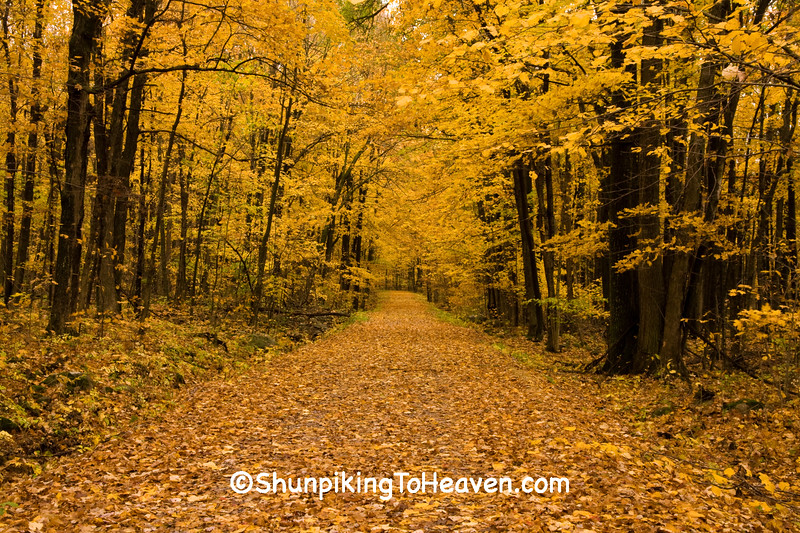 Autumn Woods with Leaf-Covered Road, Sauk County, Wisconsin