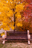 Autumn in the Park, Price County, Wisconsin