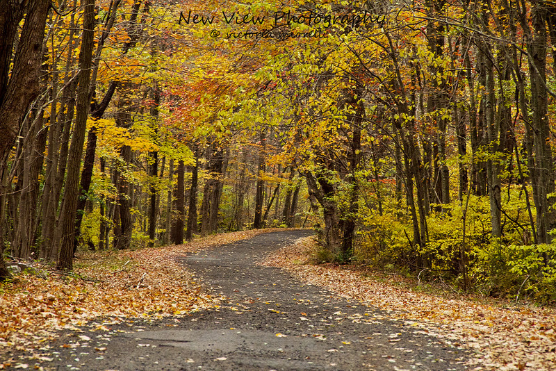 The road leading into Holbrook Pond, Hebron, CT