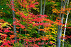 Fall Color, Juneau County, Wisconsin