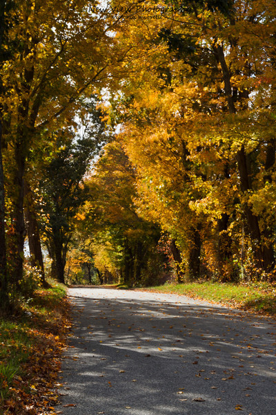 A back road in Hebron, CT on a cool Autumn Morning