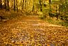 Autumn Road Scene with Fallen Leaves, Sauk County, Wisconsin
